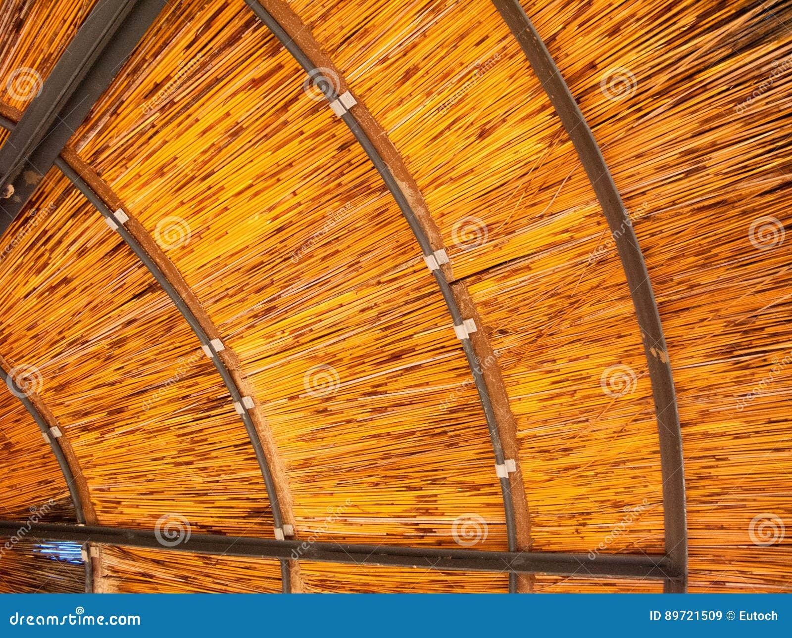 Por Debajo Del Paraguas Al Aire Libre Fondo Imagen De