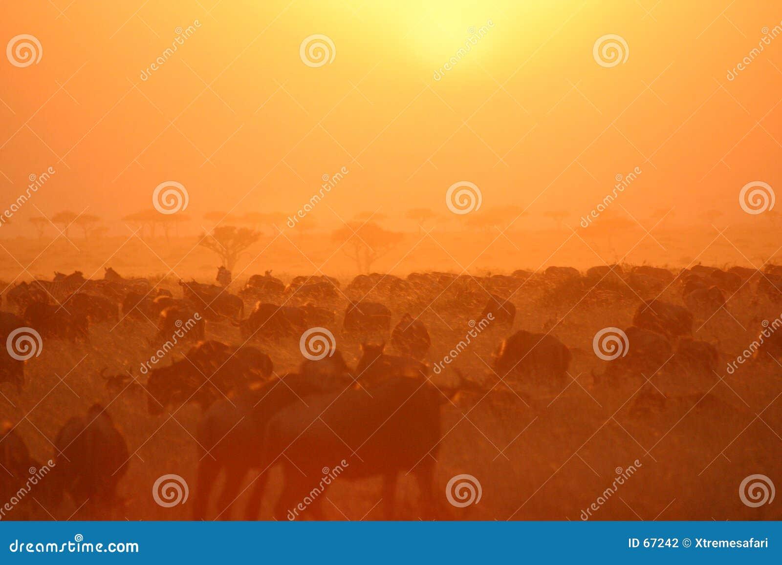 Por do sol 6.04 da migração