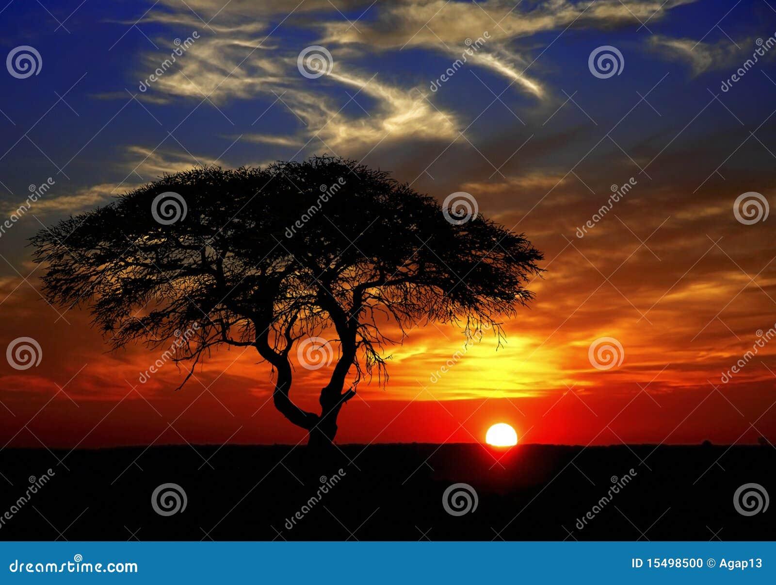 Por do sol africano