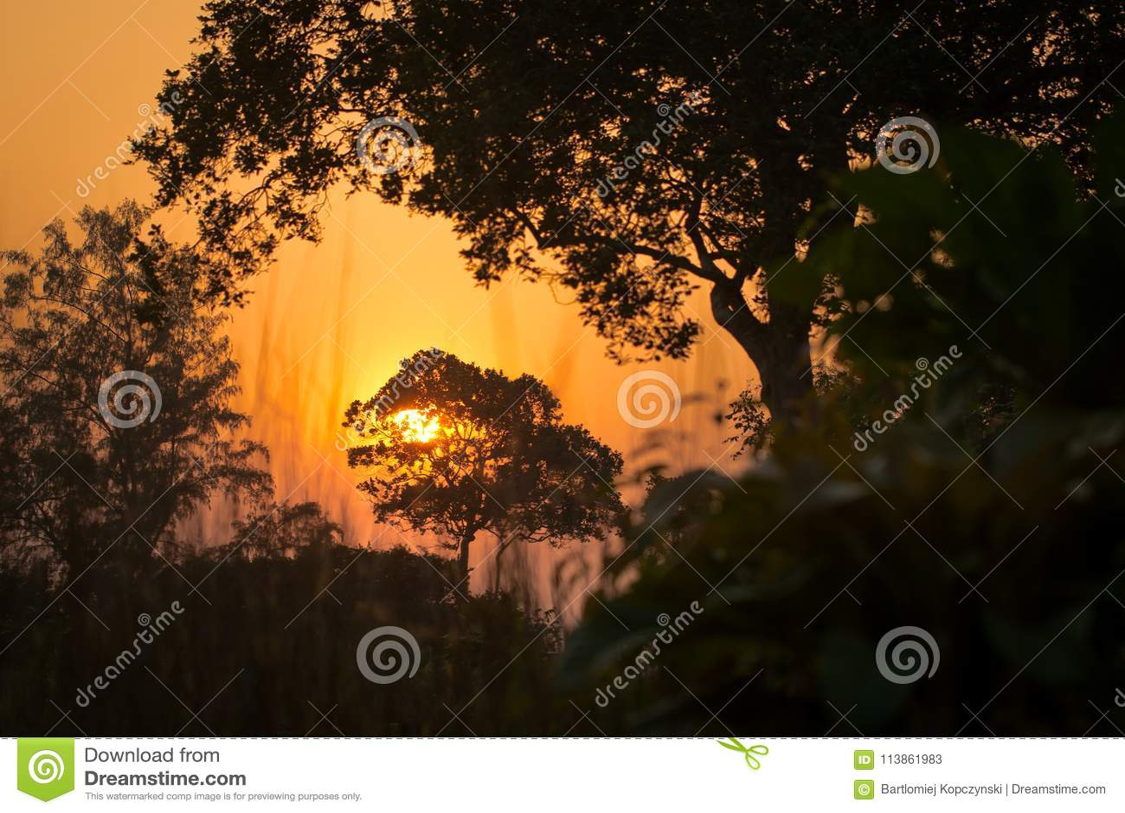 Por do sol bonito na selva