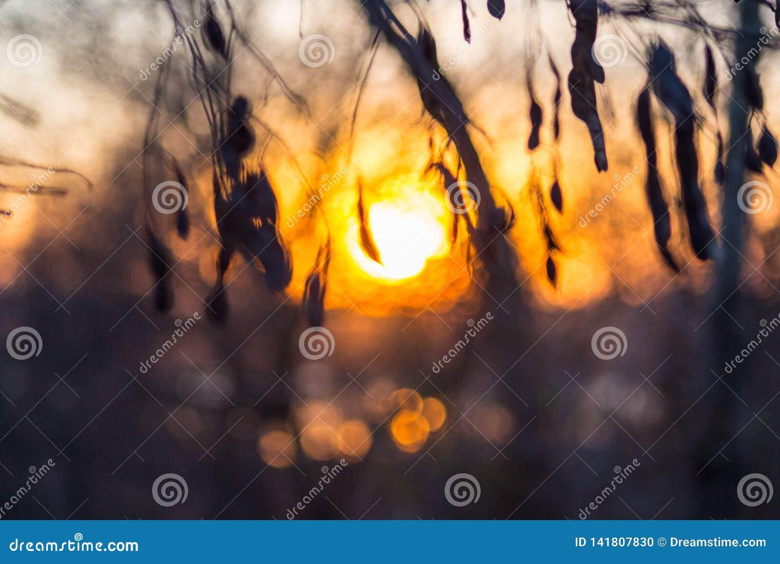 Por do sol bonito no fundo da floresta
