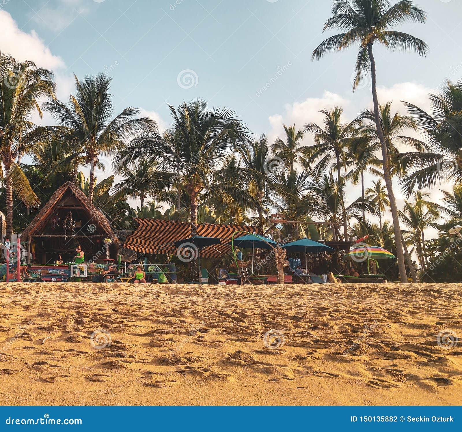 Por do sol com as palmeiras na praia de Sayulita