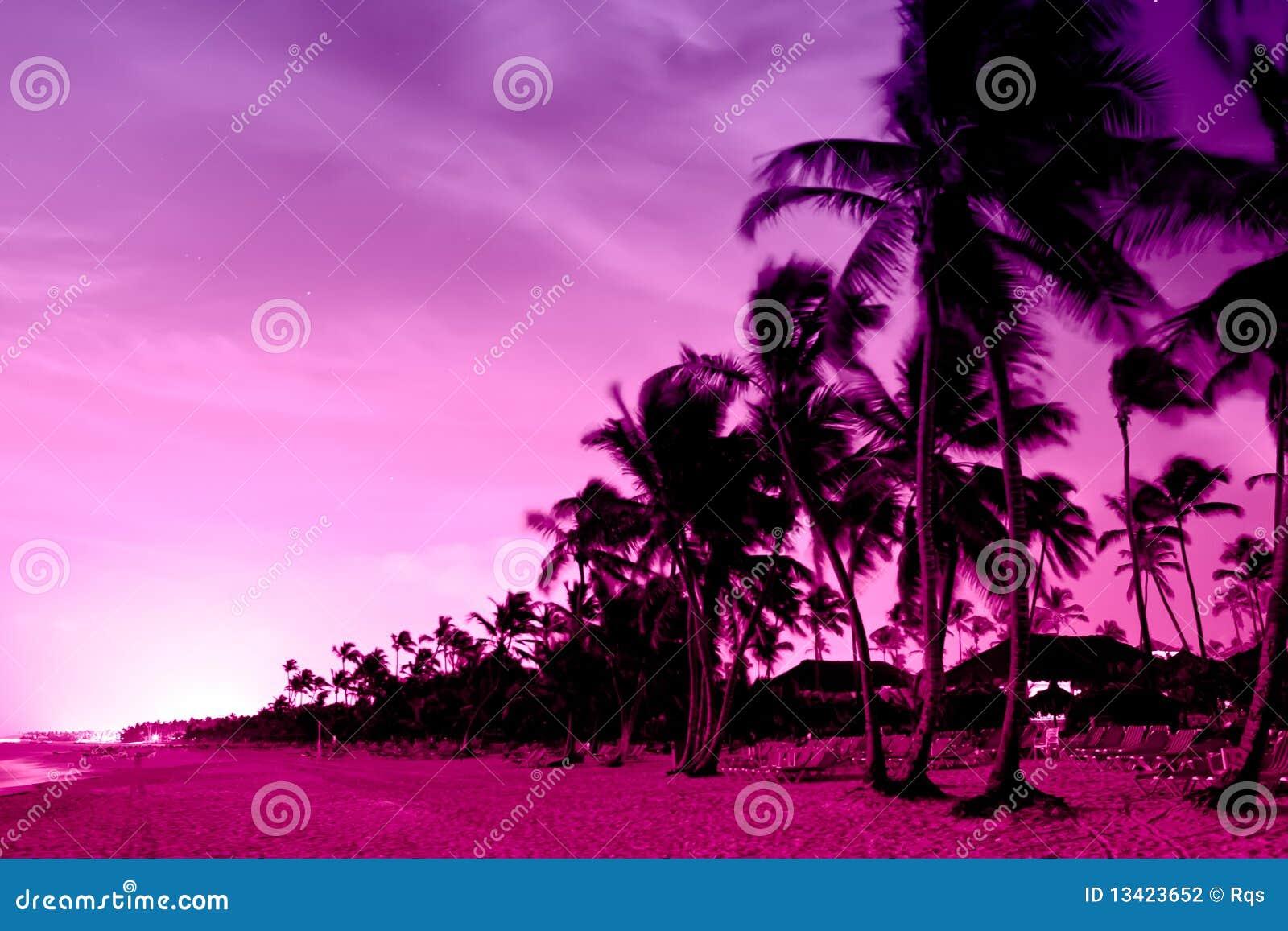 19188ff425208 Por Do Sol Cor-de-rosa E Vermelho Sobre A Praia Do Mar Com Palmas ...