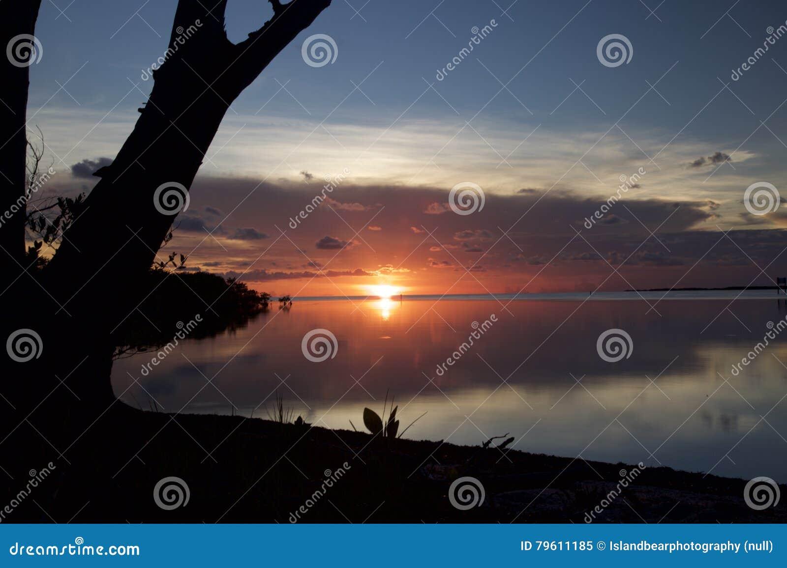 Por do sol cor-de-rosa que reflete na água nas madeiras