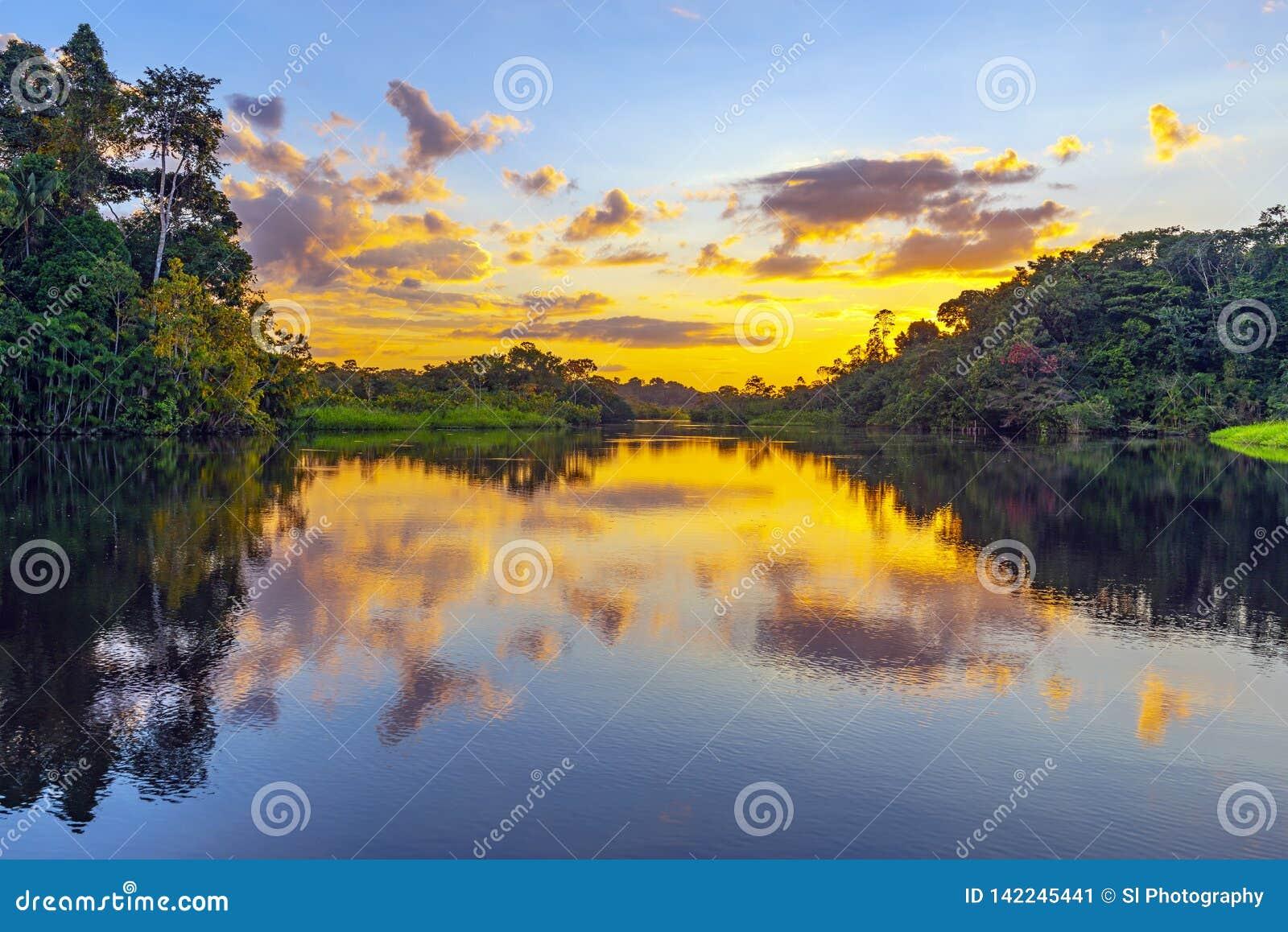 Por do sol da floresta úmida das Amazonas, Ámérica do Sul