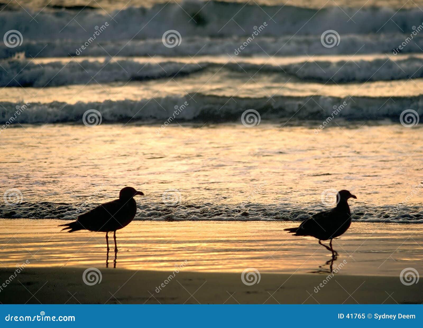 Por do sol de duas gaivota