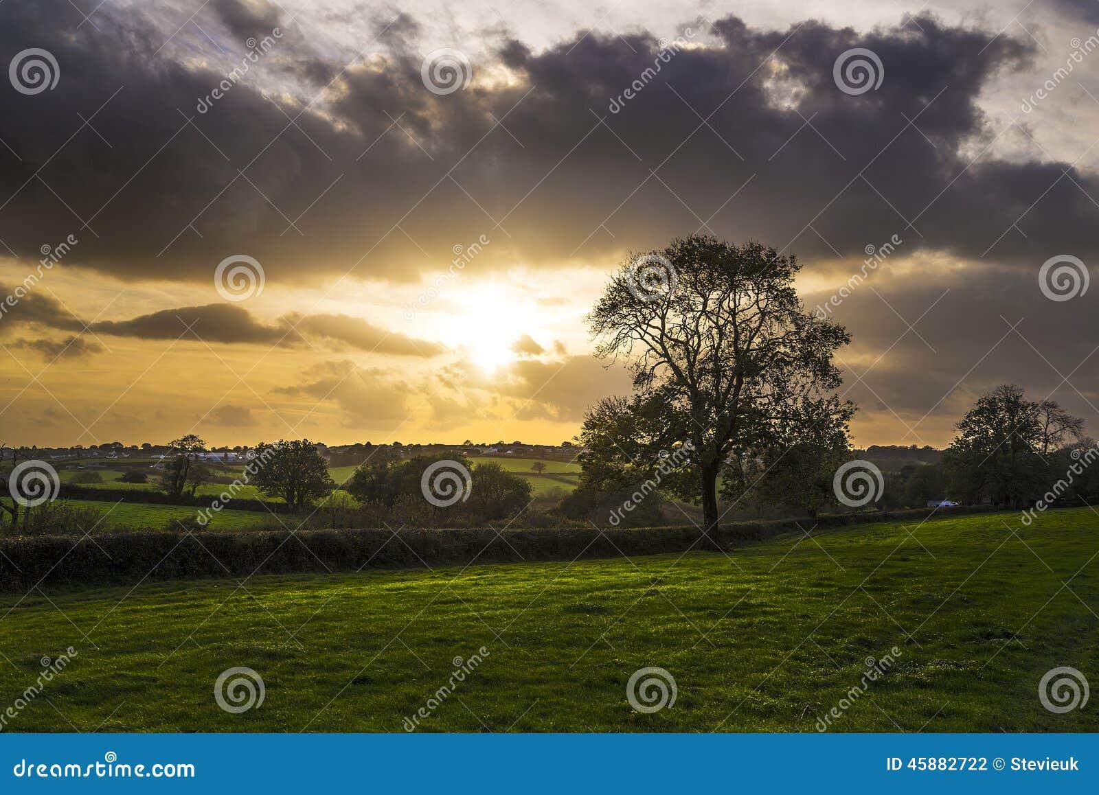 Por do sol em campos de exploração agrícola com árvore e o céu nebuloso bonito, Cornualha, Reino Unido