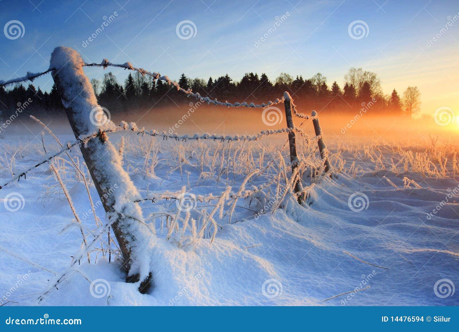 Por do sol frio morno do inverno