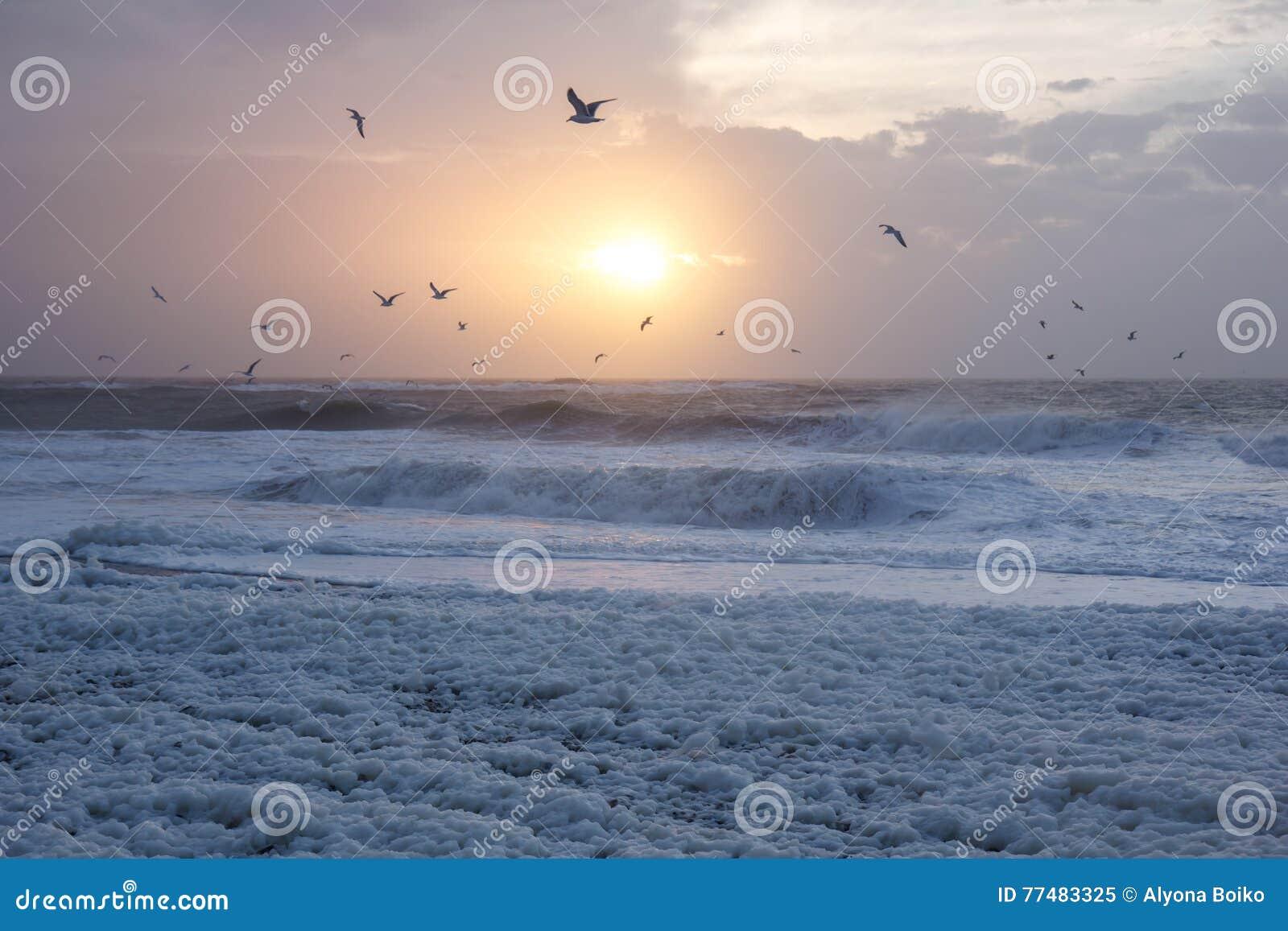 Por do sol frio na praia com espuma do mar e pássaros, Thisted, Dinamarca