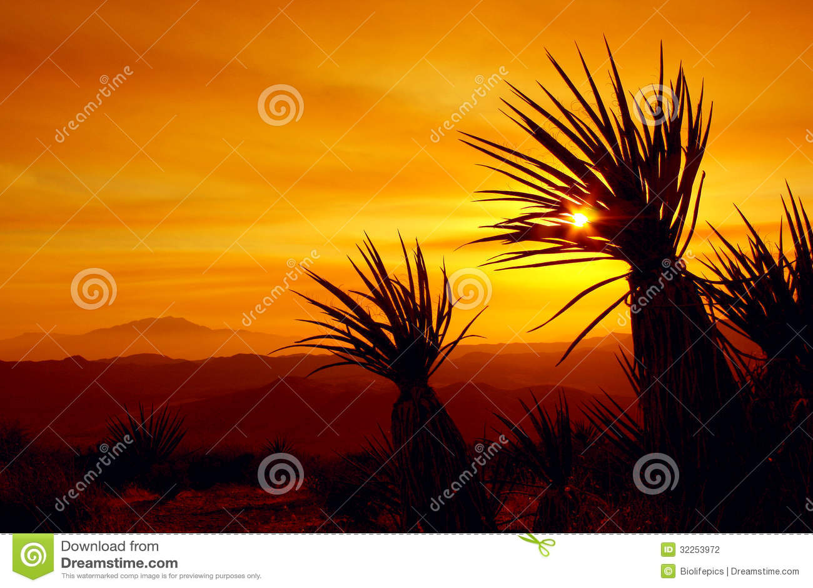 Por do sol, Joshua Tree National Park, EUA