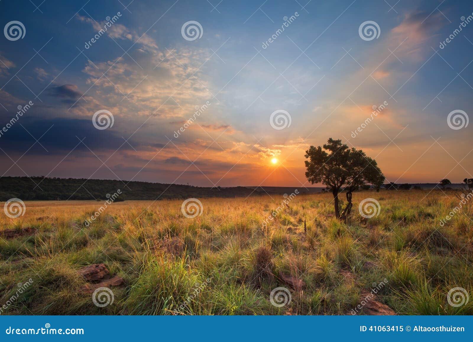 Por do sol mágico em África com uma árvore solitária em um monte e em louds