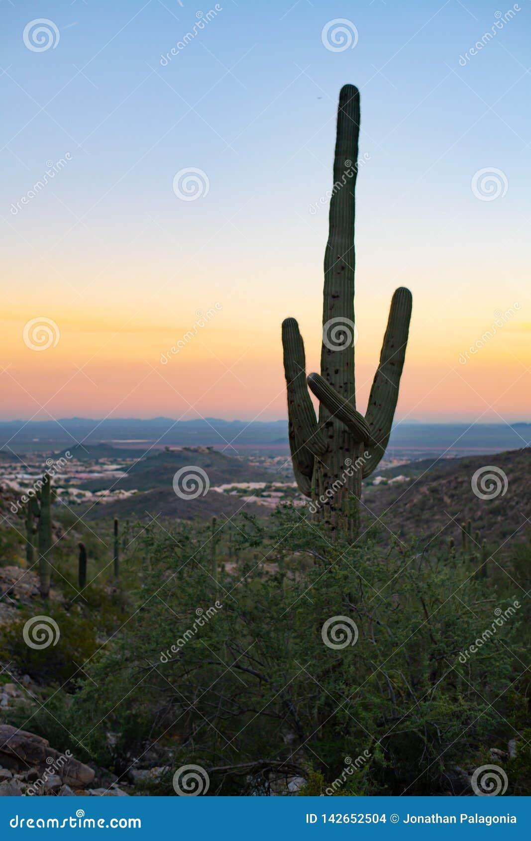 Por do sol o Arizona do cacto do Saguaro
