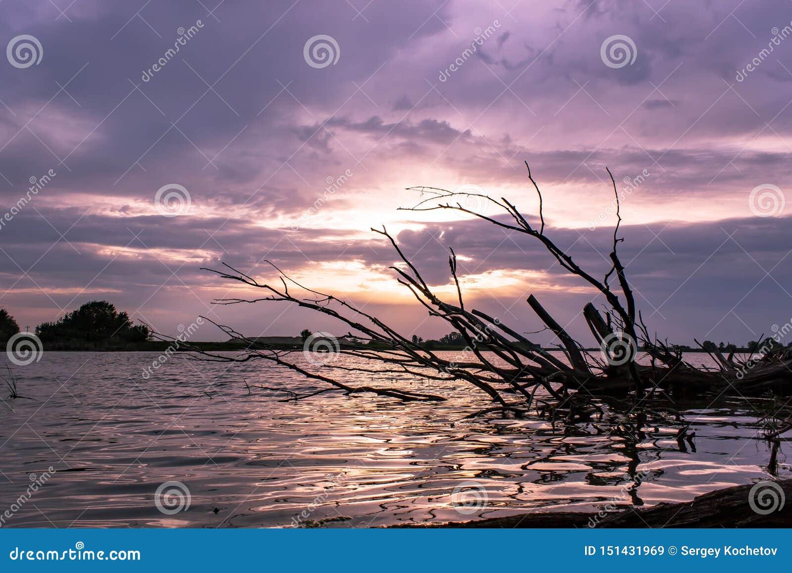 Por do sol roxo bonito do verão no lago