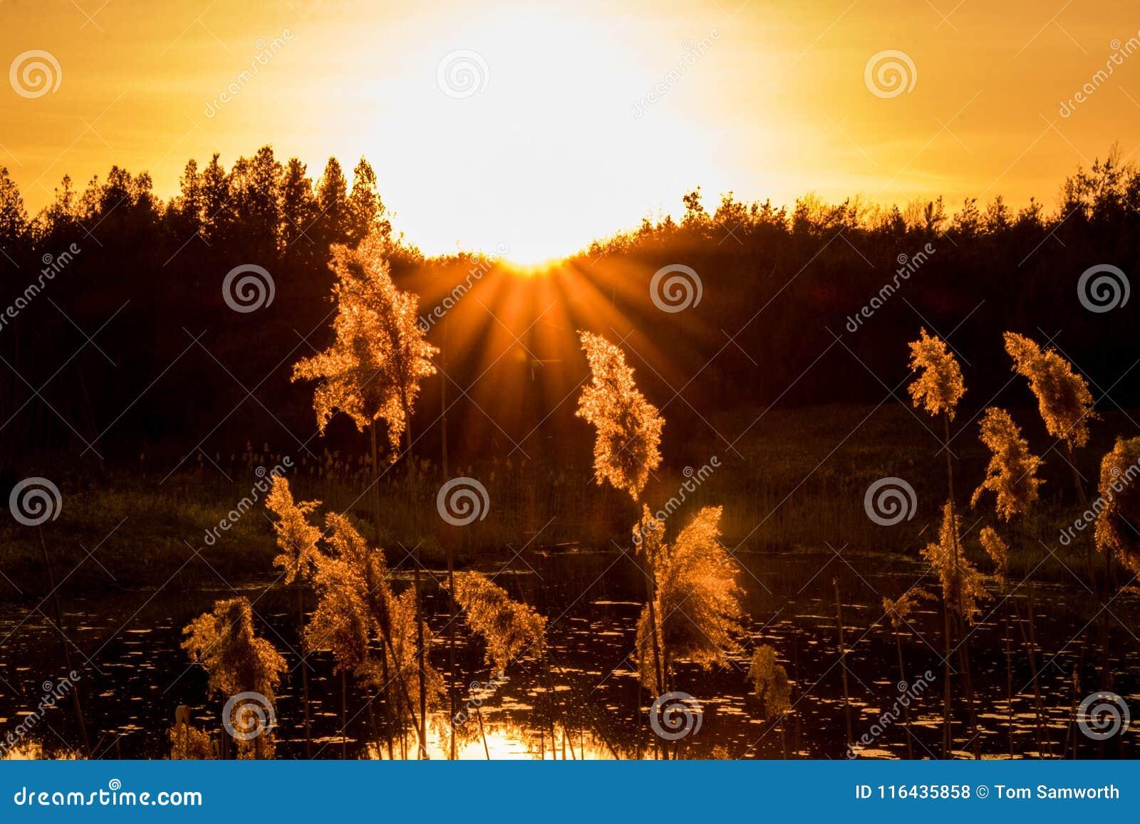 Por do sol sobre árvores em Forest Pond