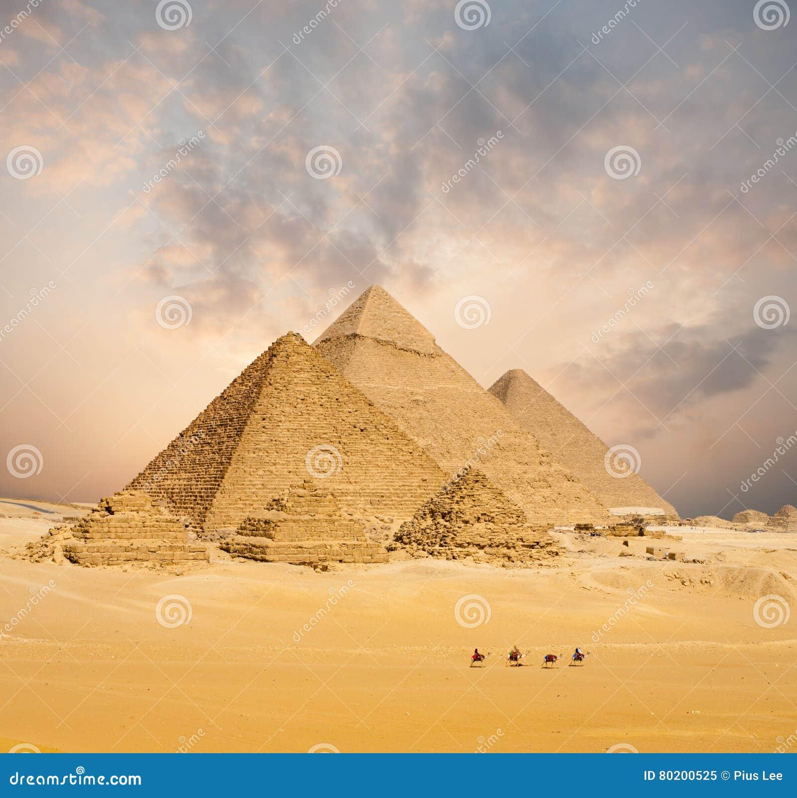 Por do sol todo o largo distante dos camelos egípcios das pirâmides