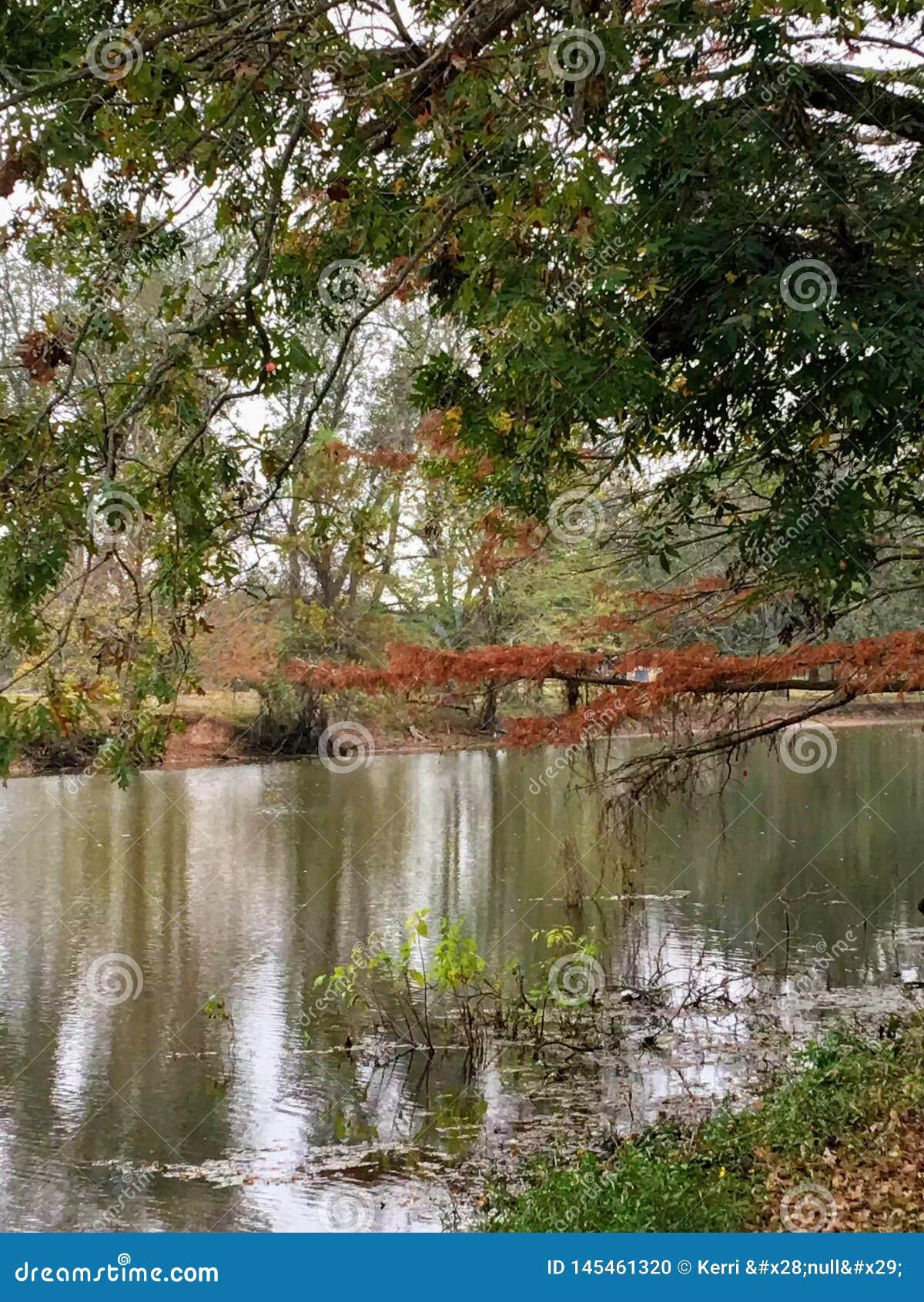 Por el arroyo