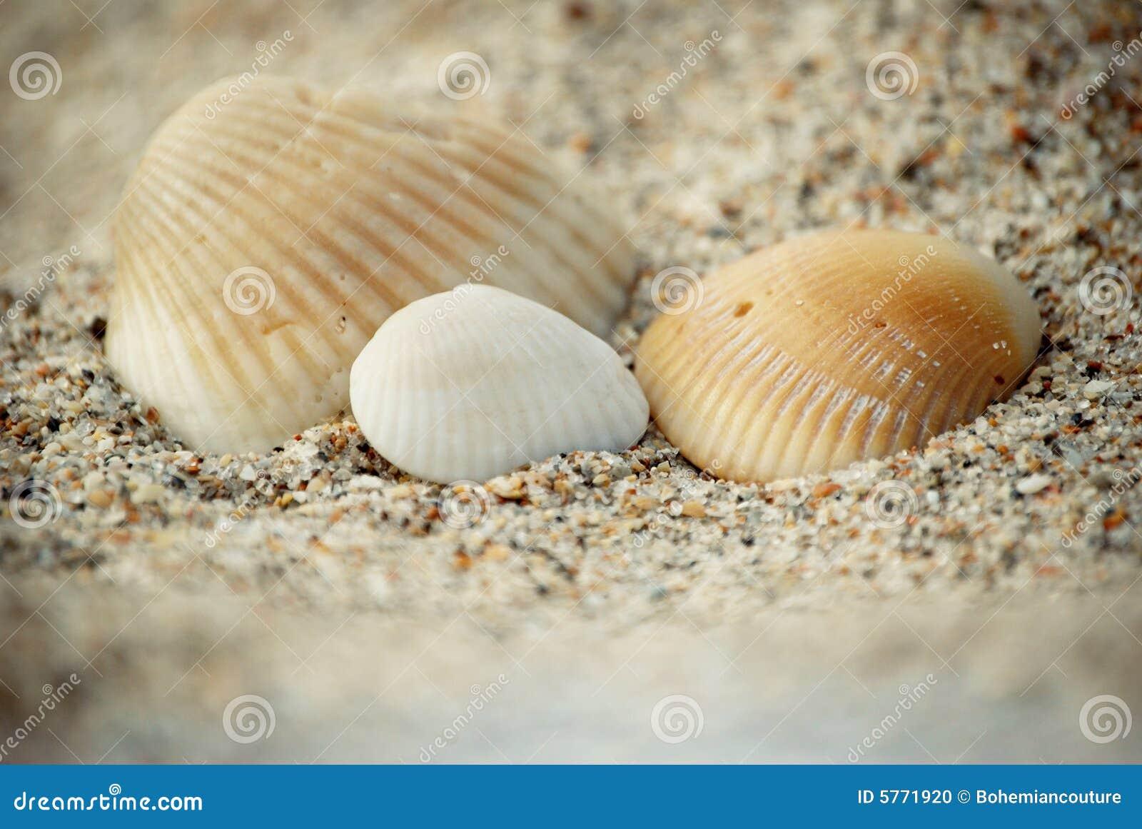 Por la orilla de mar