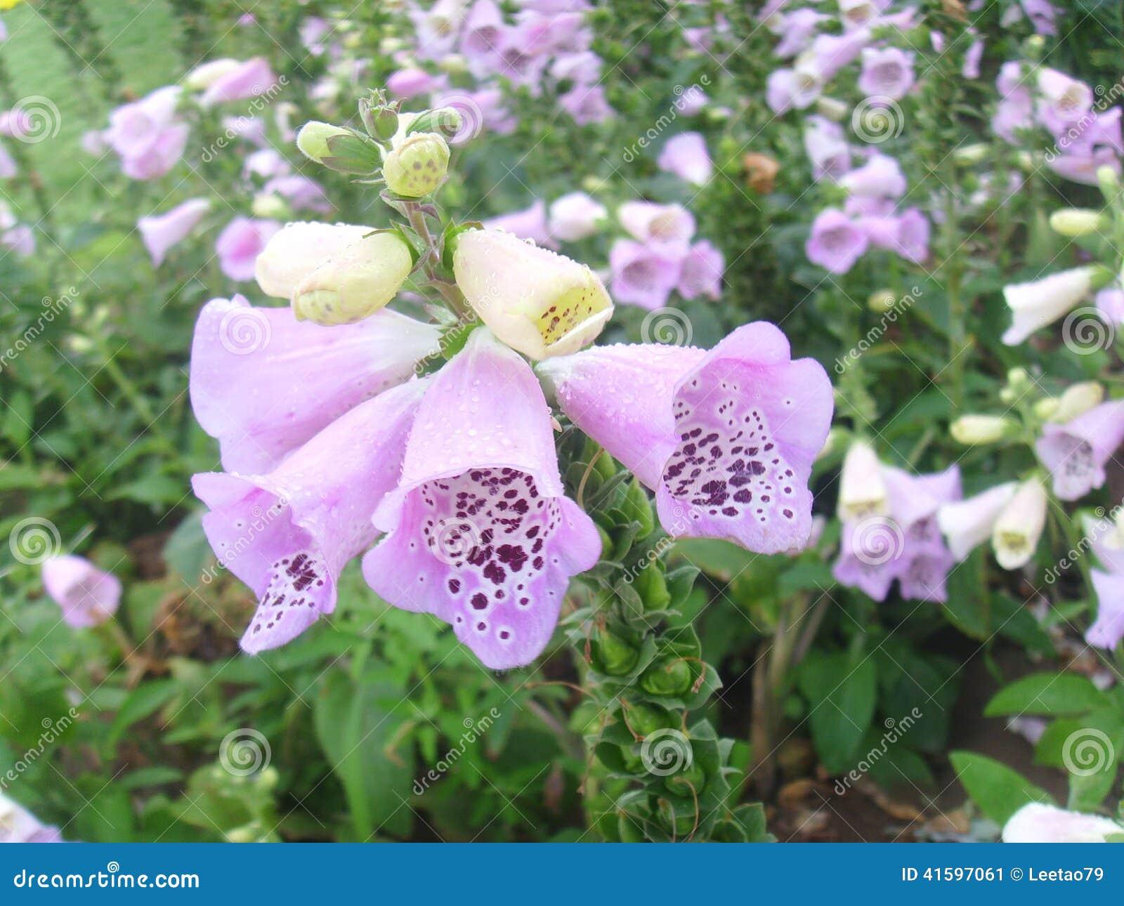 Porcelanowy Jinzhou Expositionï ¼  Międzynarodowy Ogrodniczy kwiat