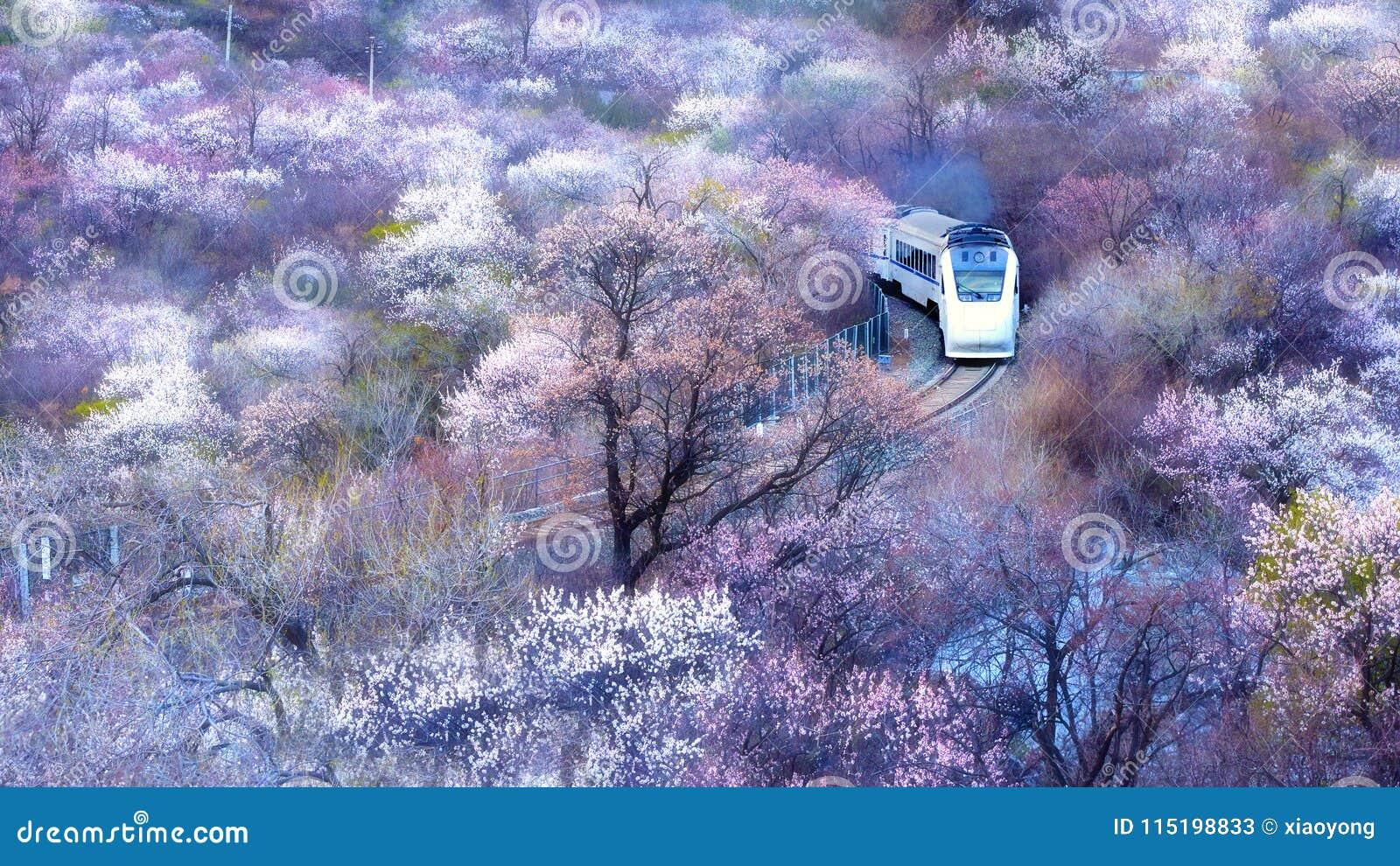 Porcelanowy wysoki prędkość pociąg biega przez oceanu kwiaty