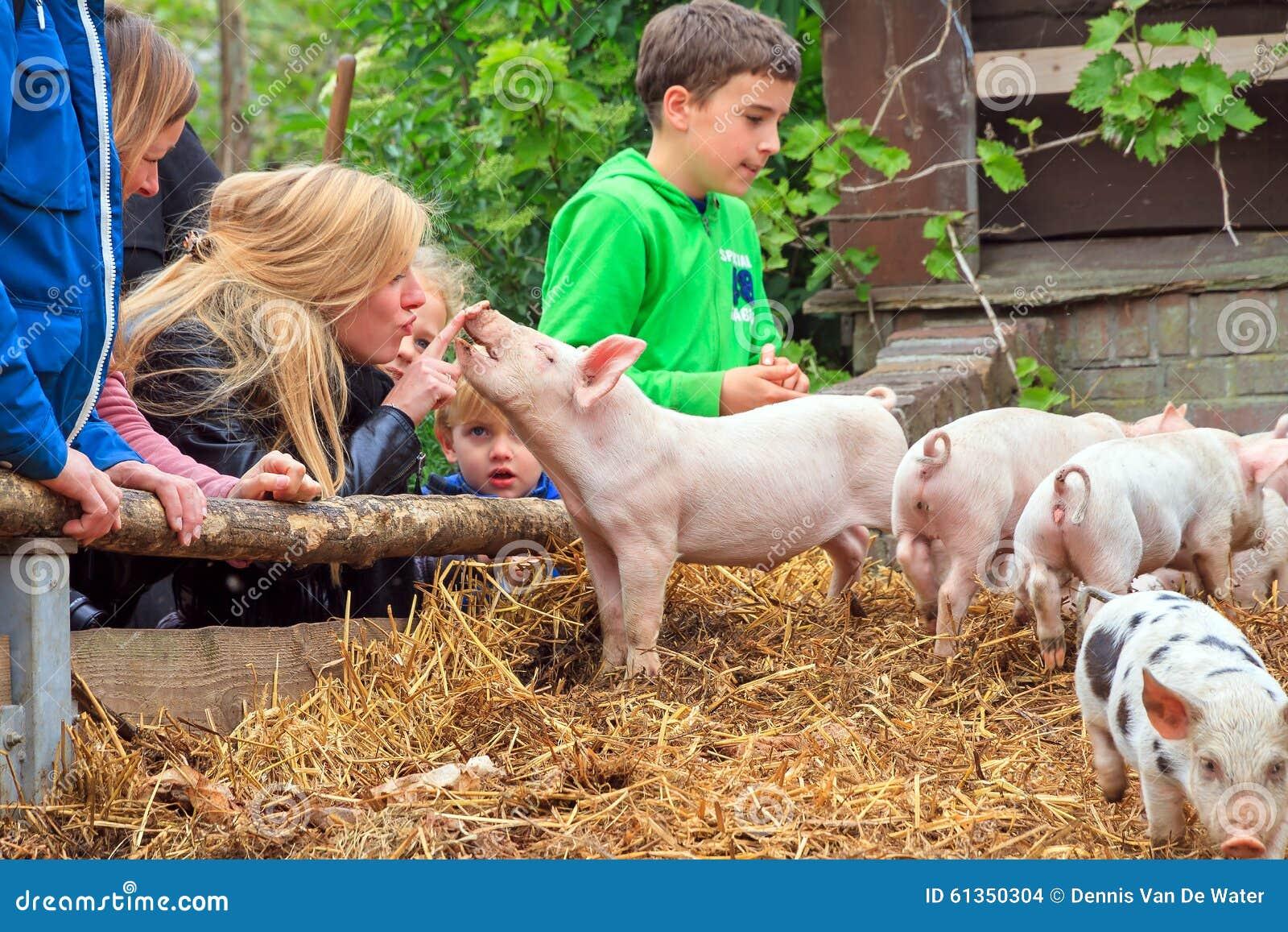 Porcos das trocas de carícias