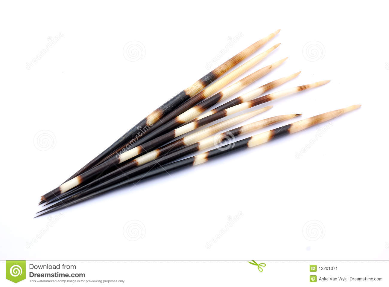 South African black and white porcupine quills. Image isolated on ...