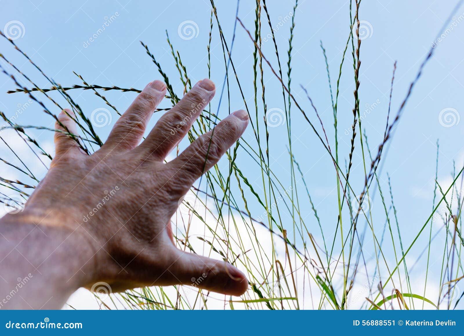 Portata della mano per erba