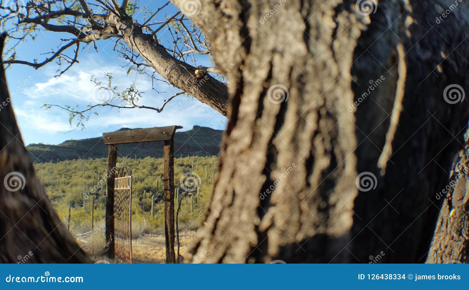 Porte dans le sauvage