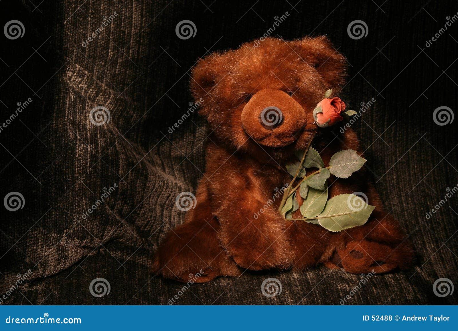 Download Porter Rose photo stock. Image du rose, roses, cuddly, doux - 52488