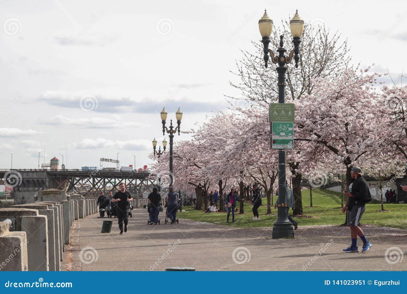 Portland, OU, les Etats-Unis - mars 2017 : Les gens marchant le long de la traînée de vélo de bord de mer comme cerisiers fleuris