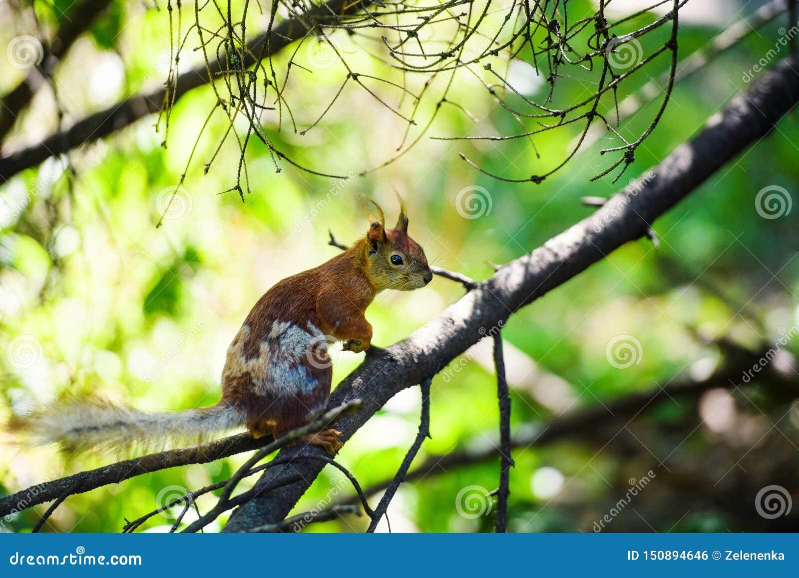Porträt des Eichhörnchens sitzend auf einer Niederlassung