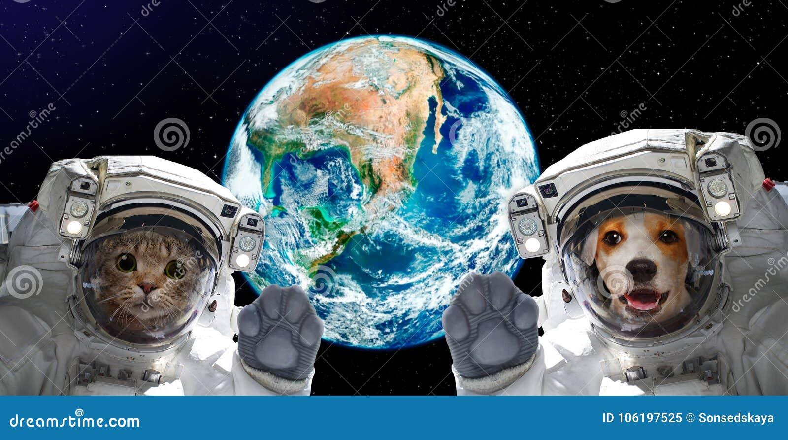 Porträt einer Katze und der Hundeastronauten auf dem Hintergrund der Kugel