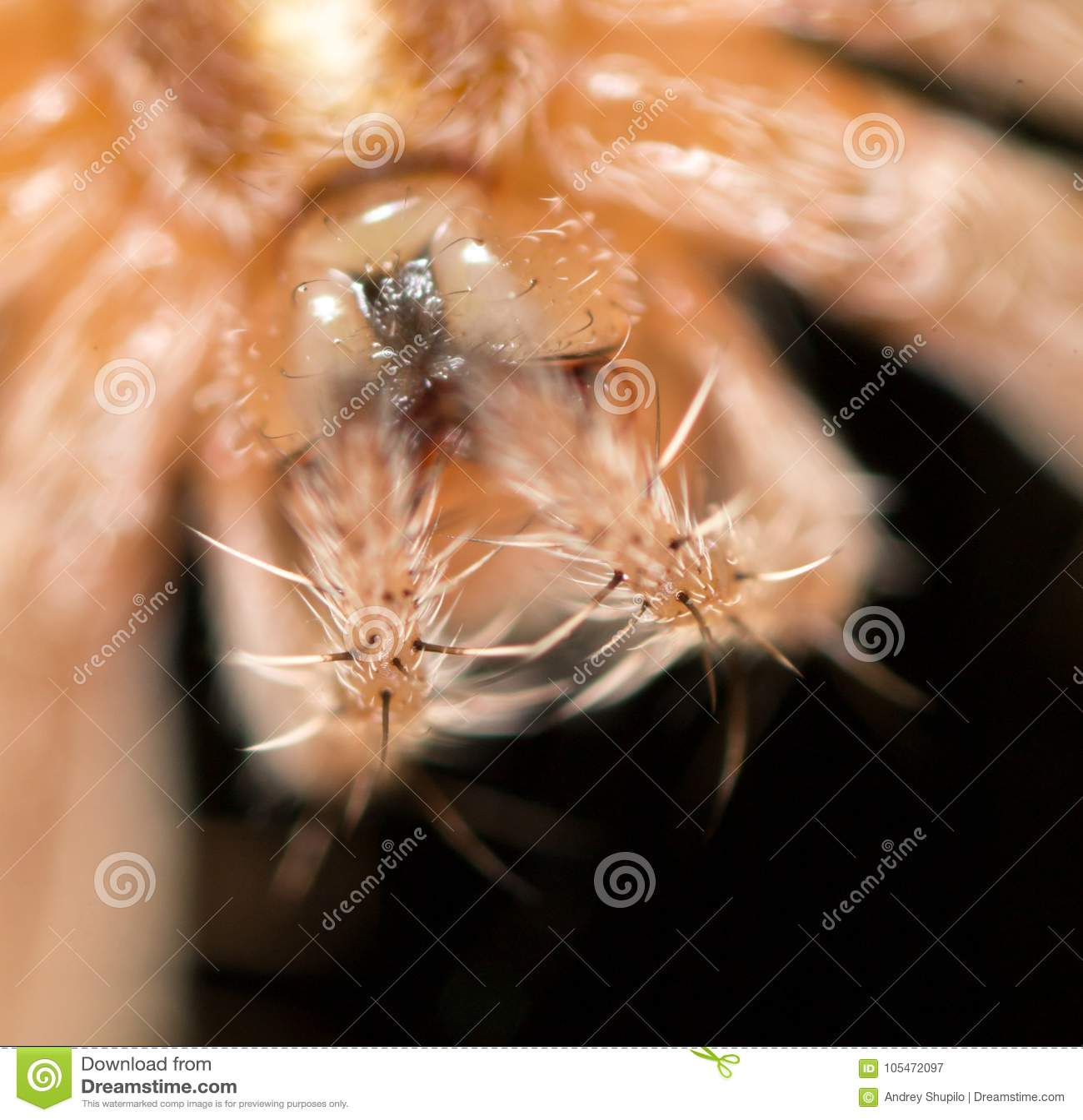 Porträt einer Spinne abschluß