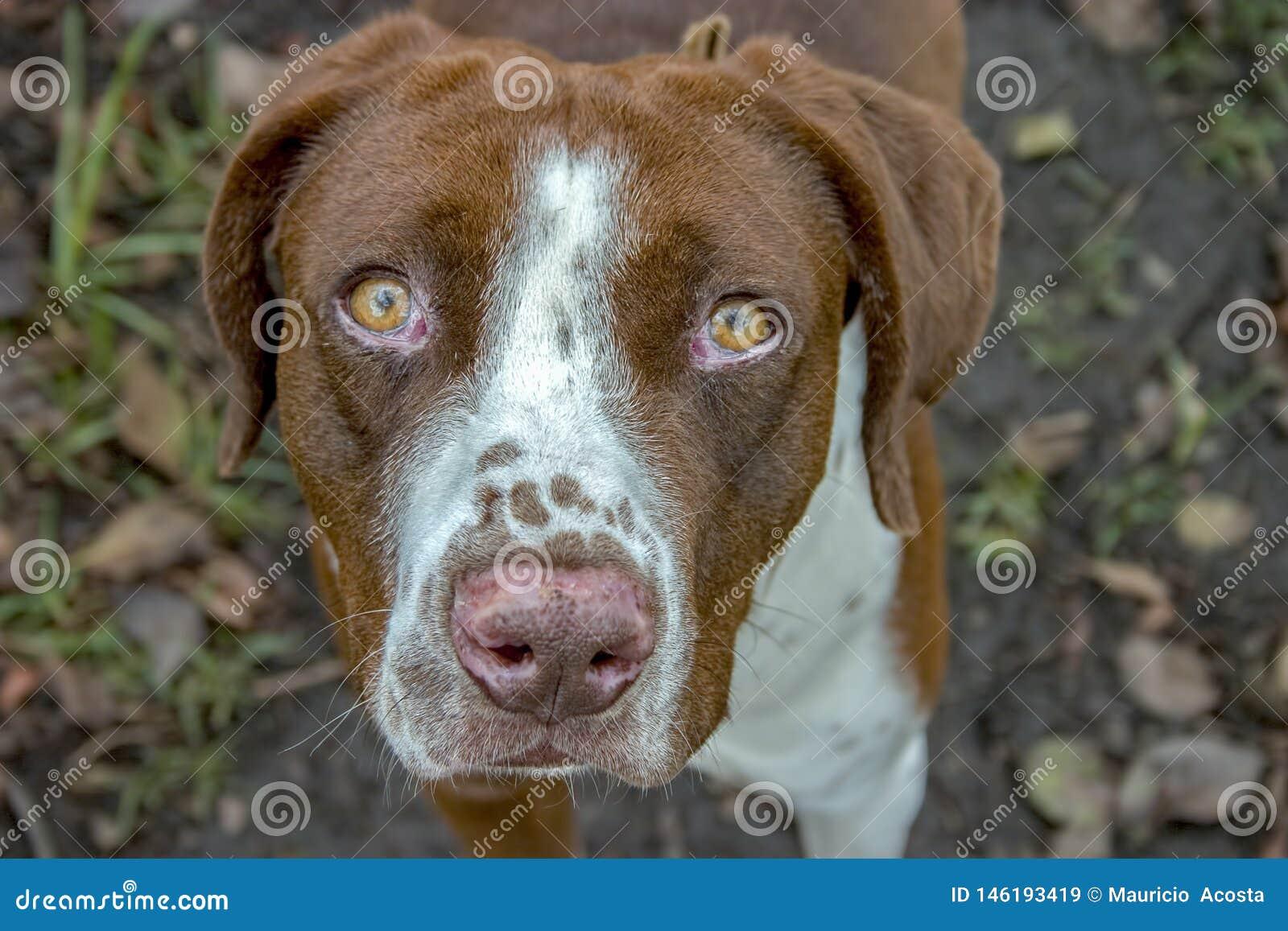 Porträtphotographie eines nicht reinrassigen Hundes