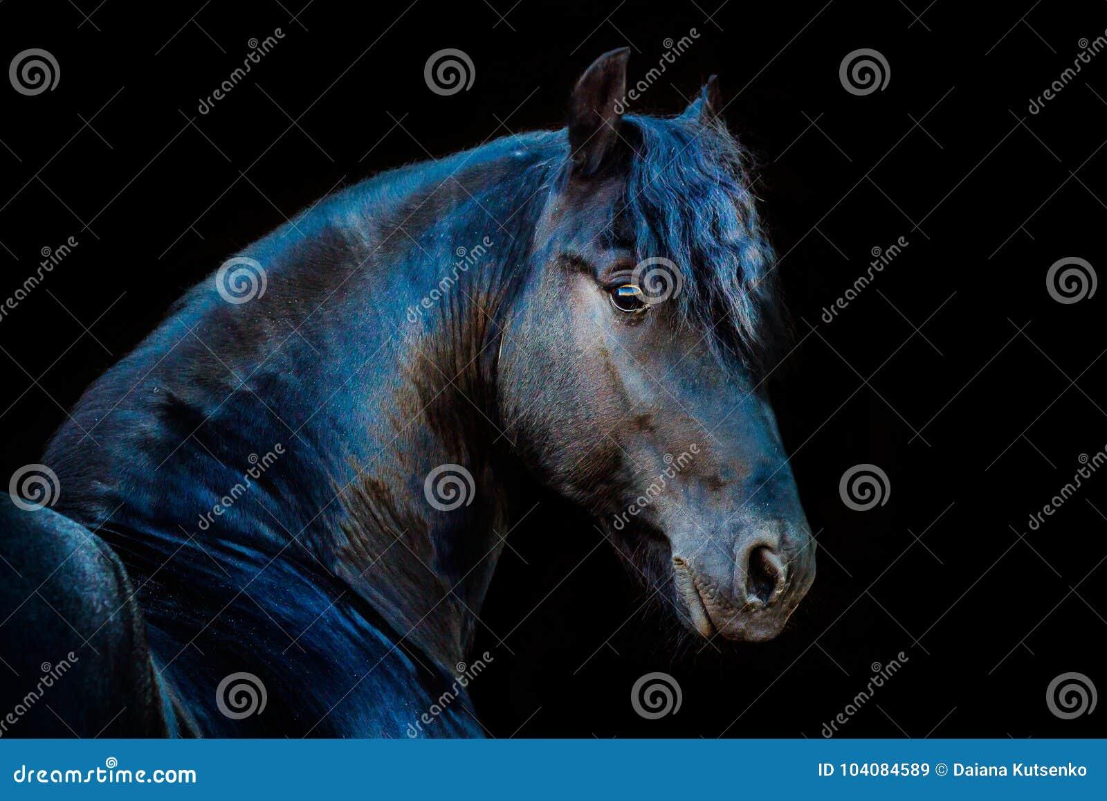 Porträts von Pferden