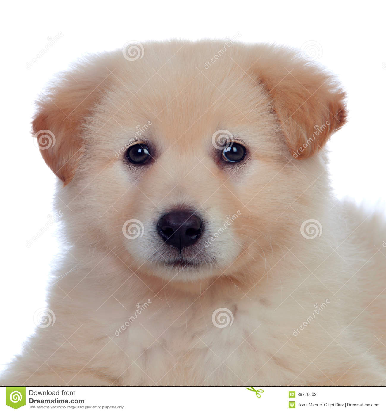 Portrait of adorable puppy dog with smooth hair