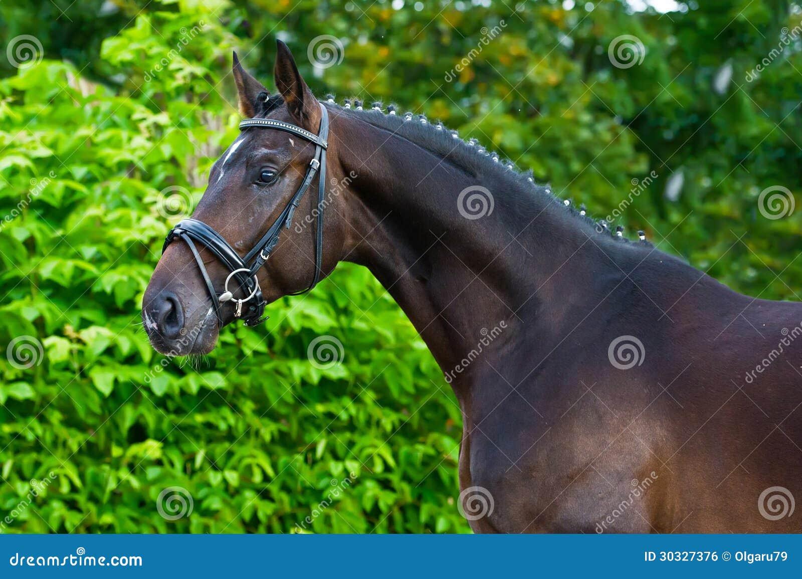 Horse breeder business plan bundle