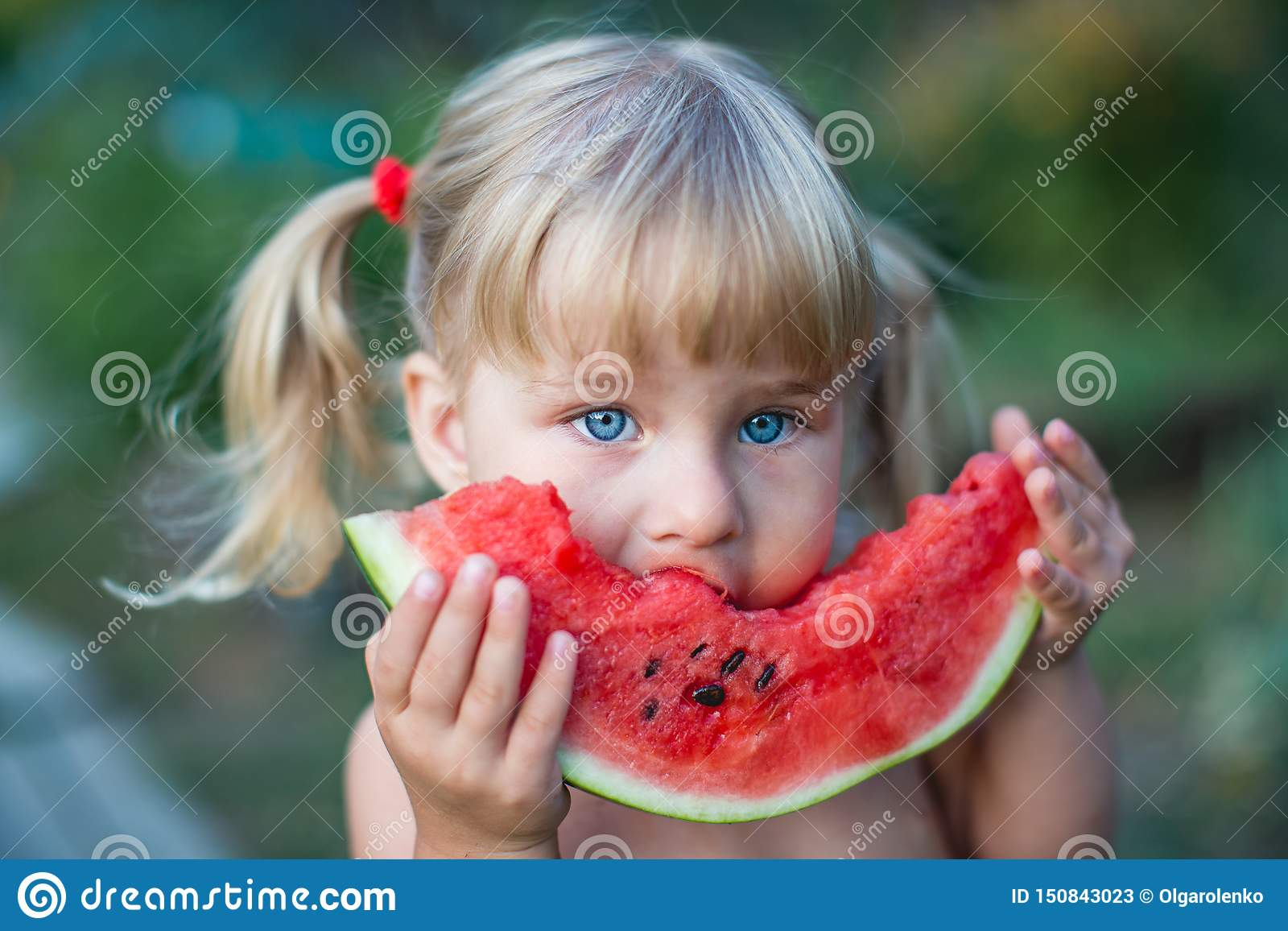 Portrait of beautiful blonde little girl with two ponytails eating watermelon