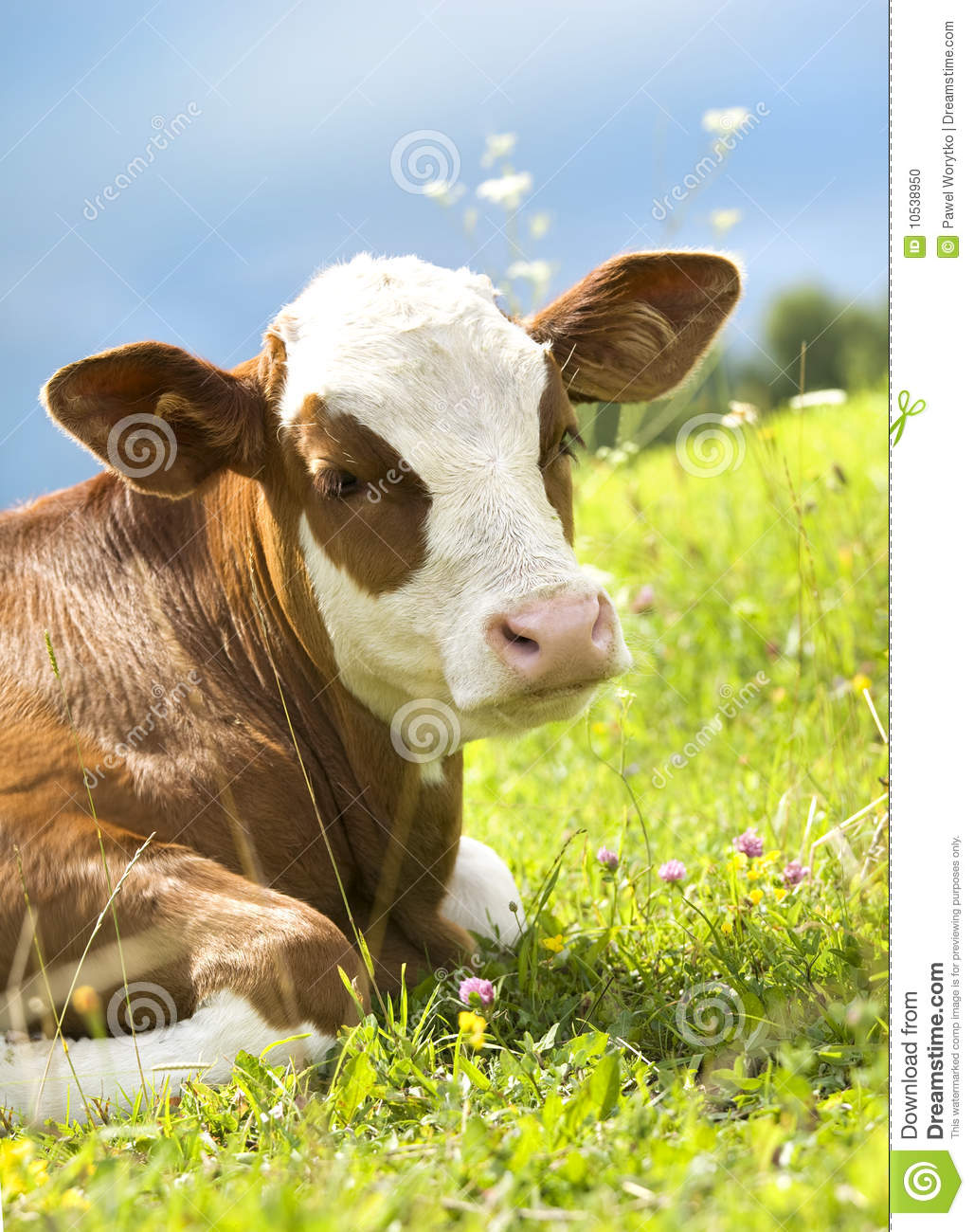 Portrait of a beautiful cow on the grass