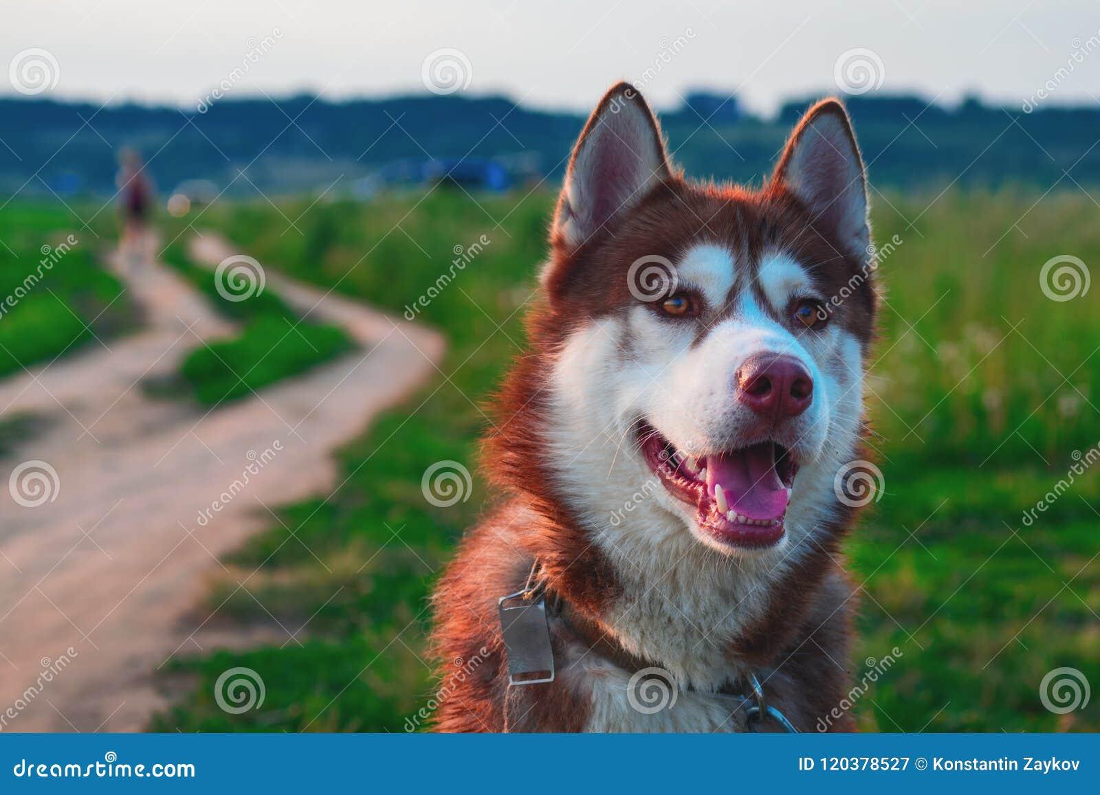 Portrait beautiful dog in nature landscape.