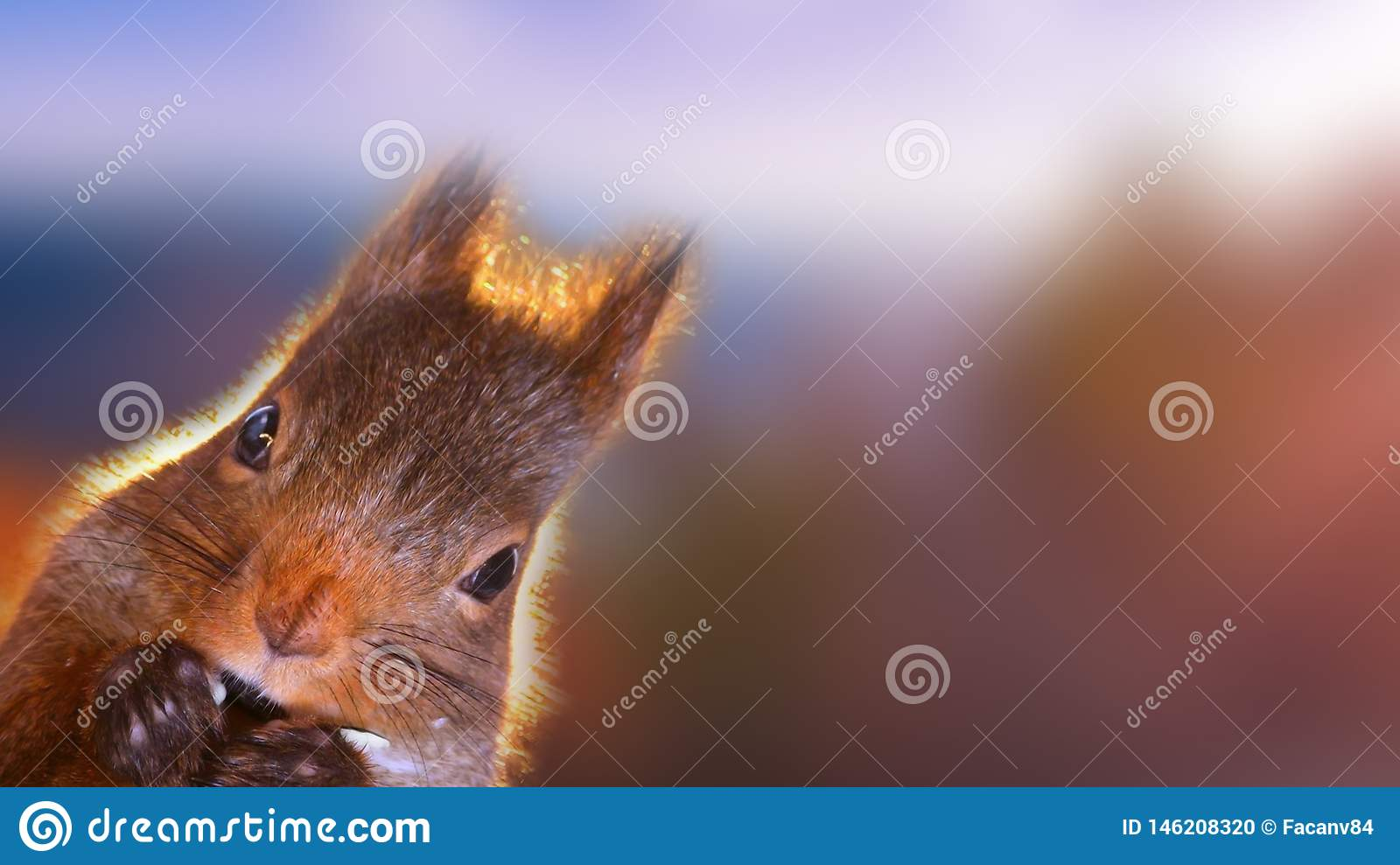 Portrait of beautiful squirrel closeup. Squirrel carefully looking at something.