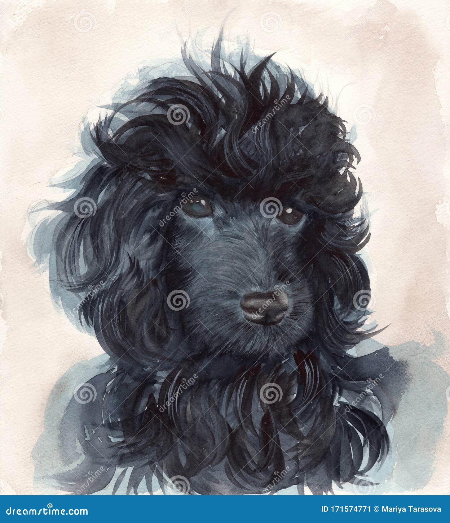 Black Poodle Stock Illustrations 1 818 Black Poodle Stock Illustrations Vectors Clipart Dreamstime