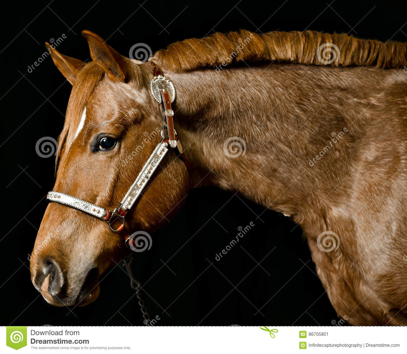 Portrait Of Brown Horse Face Stock Image Image Of Anatomy Alone