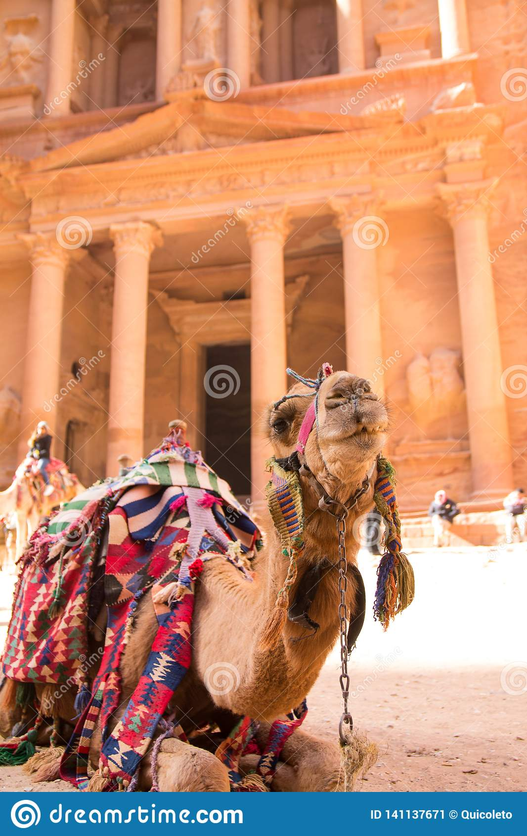A portrait of a camel in Petra