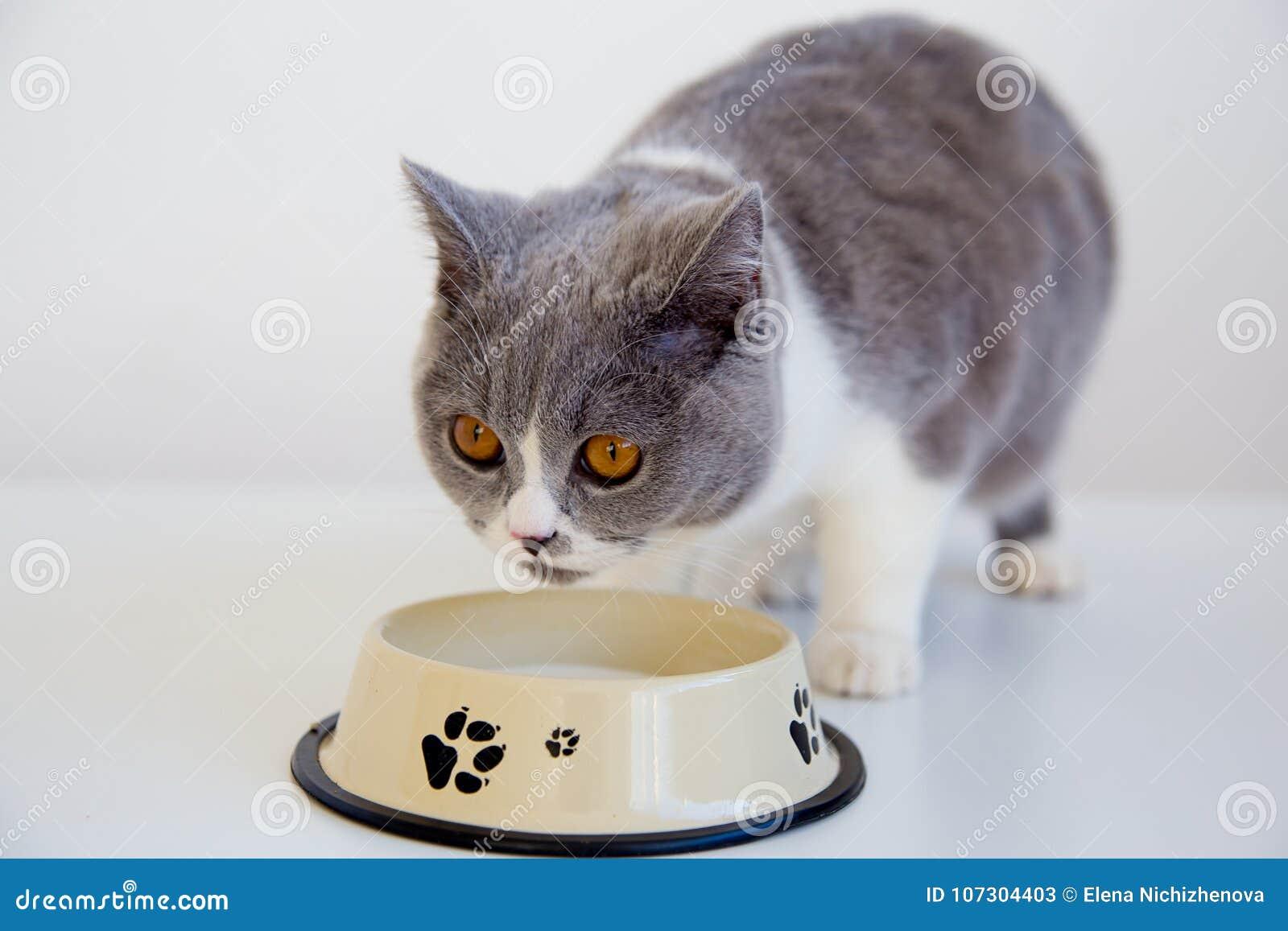 Cat eating his food