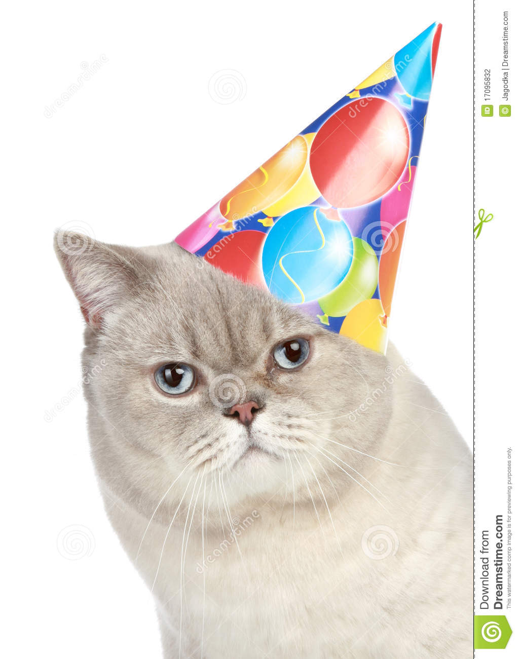 Portrait Of A Cat With Party Hat