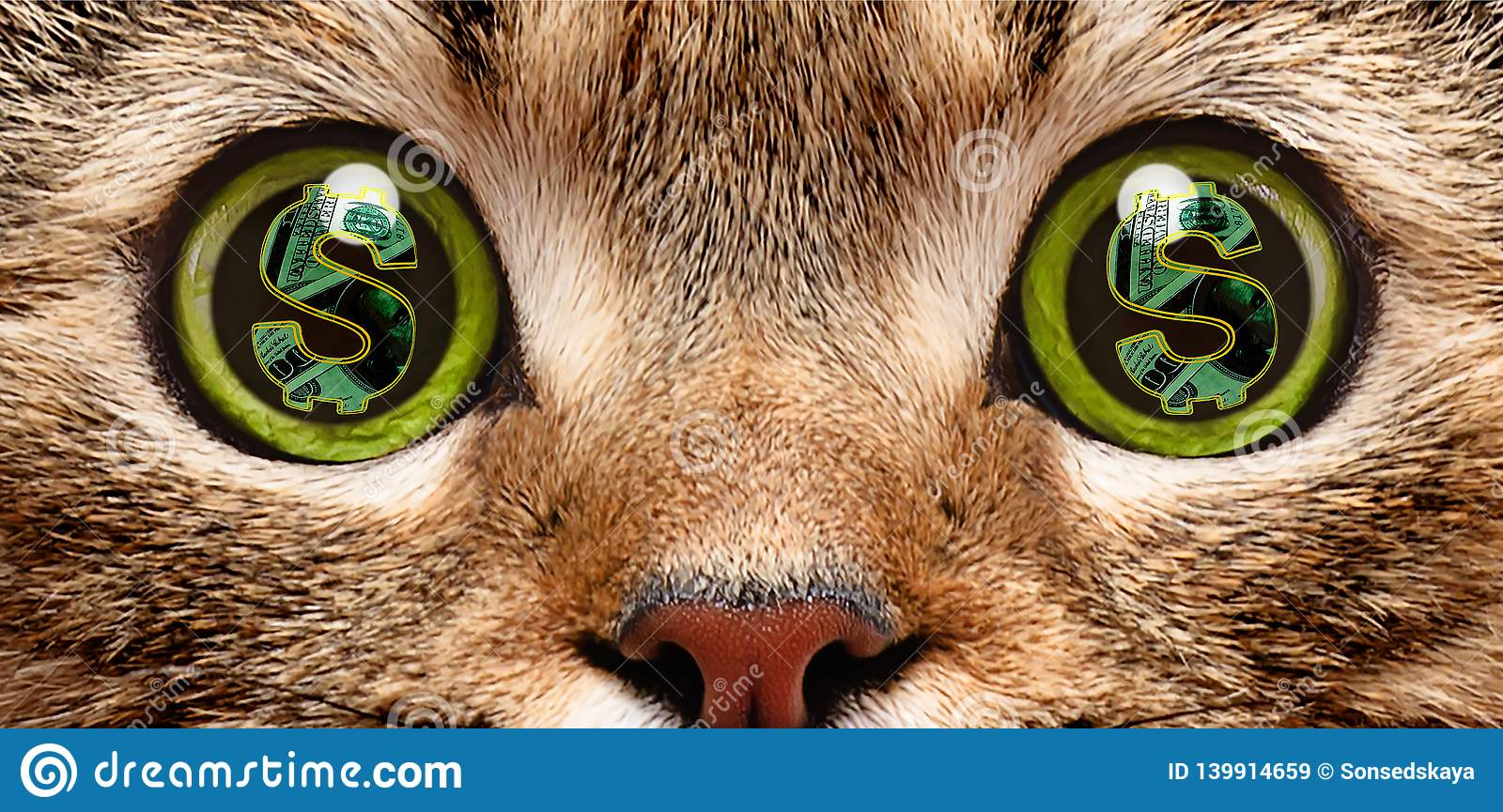 Portrait of a cat in whose eyes a symbol of dollar