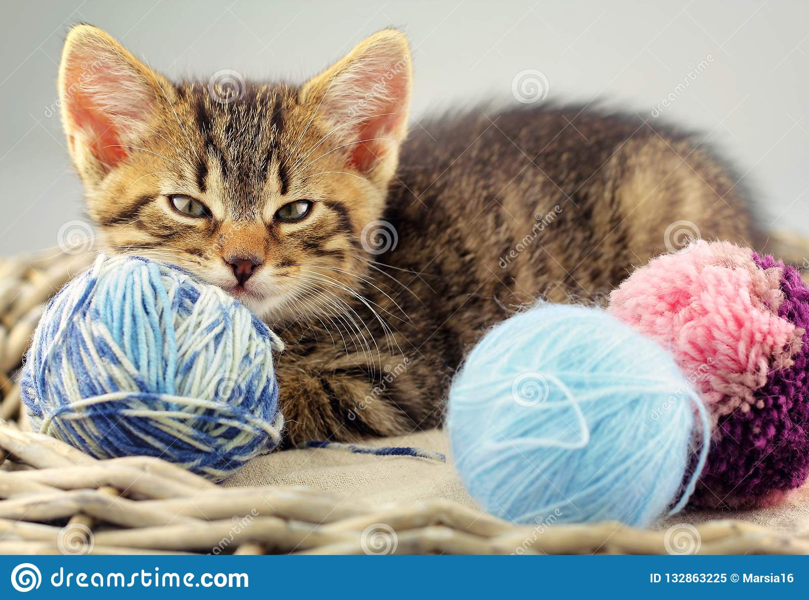 Kitten with a yarn balls of wool