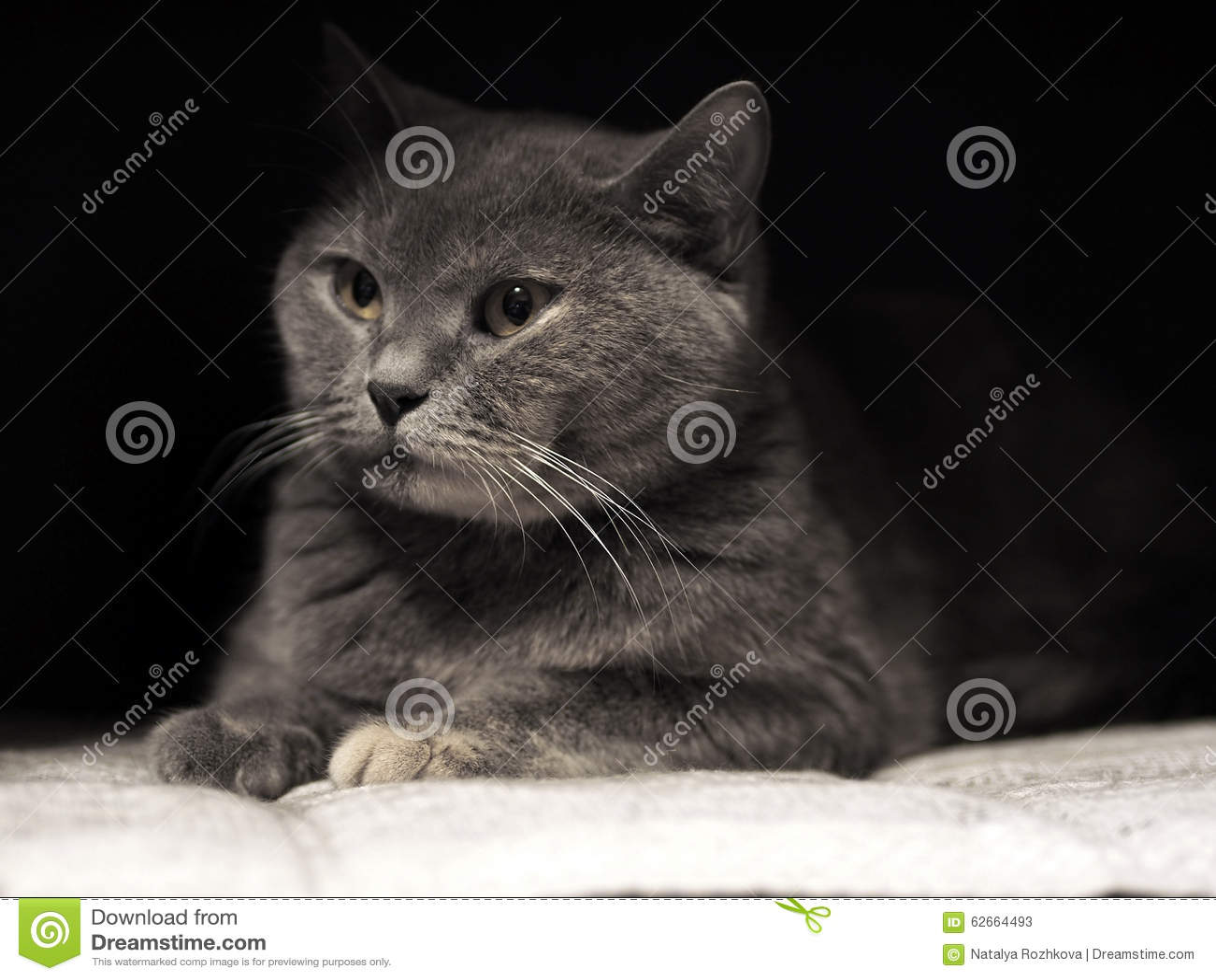 Portrait of Cheshire cat.