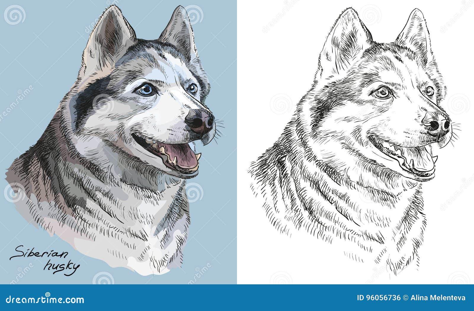 Portrait coloré et monochrome de vecteur de dessin de main de Sibérien