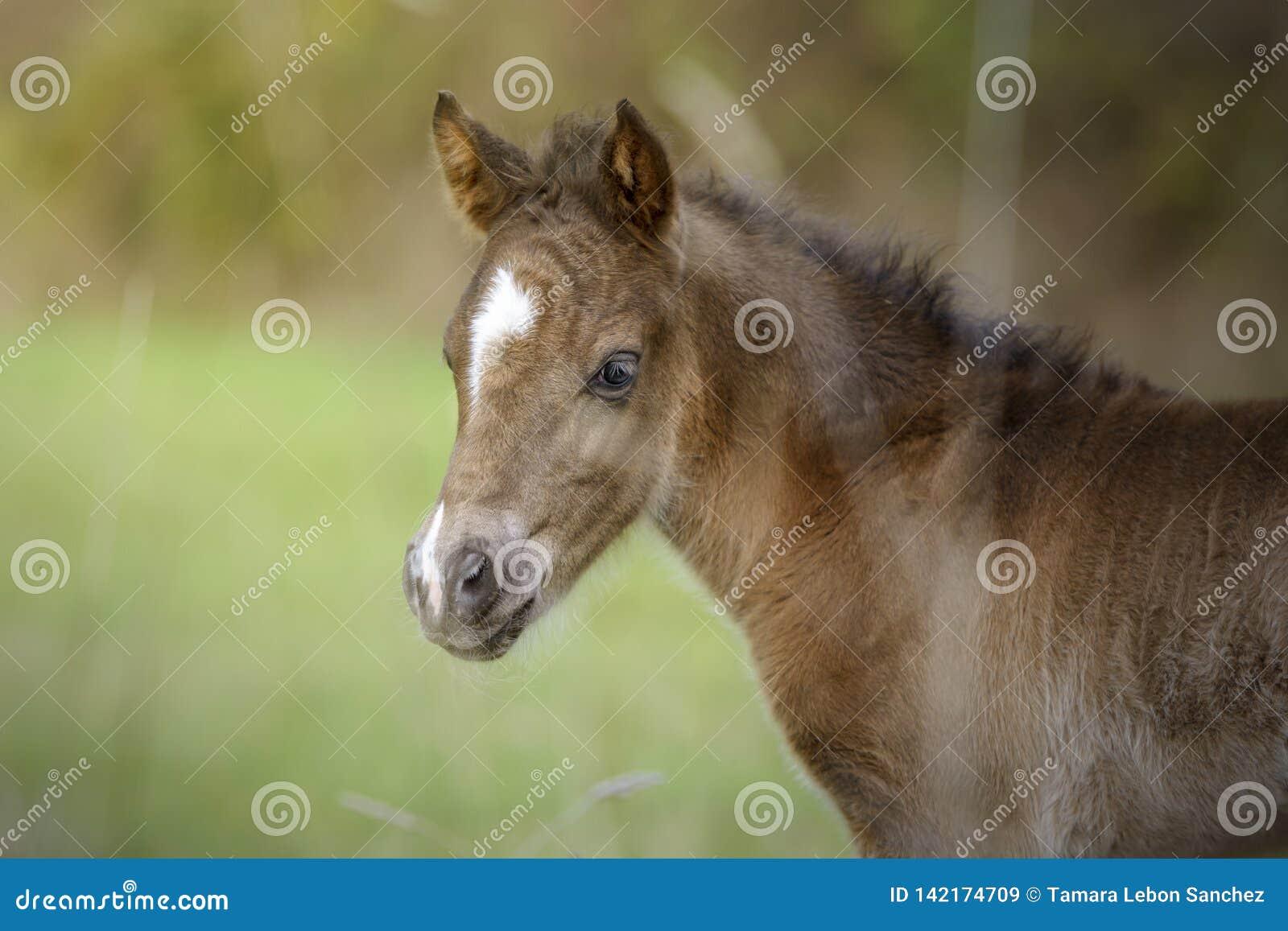 Portrait of a cute foal in the meadow